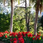 Giardini botanici di Sydney