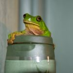 green tree frog shower