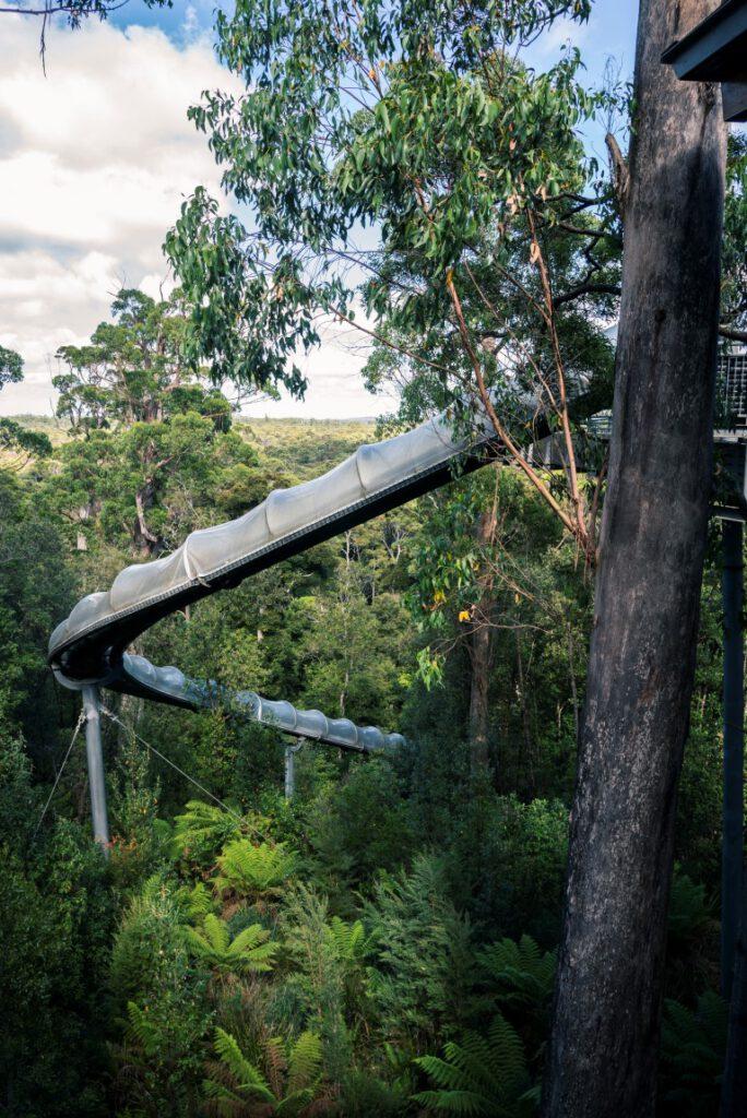 Dismal Swamp, Tasmania